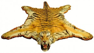 Man possessing tiger skin let off on probation