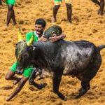 bull.1